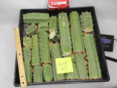 Peruvianus Cactus 8 Lbs of Bits